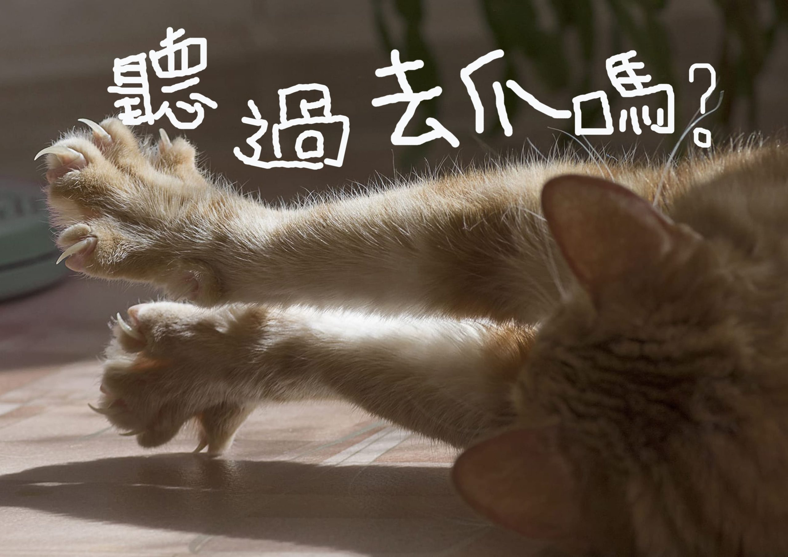 聽過貓咪去爪嗎?