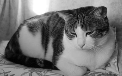 貓咪憂鬱症