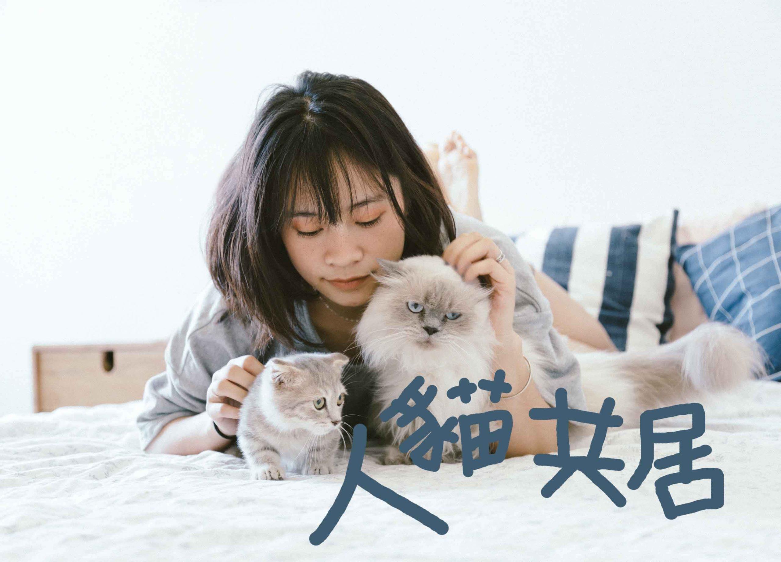 如何營造好的養貓環境?九個重點打造人貓共享居