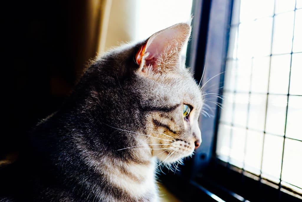 刺激貓咪視覺示意圖