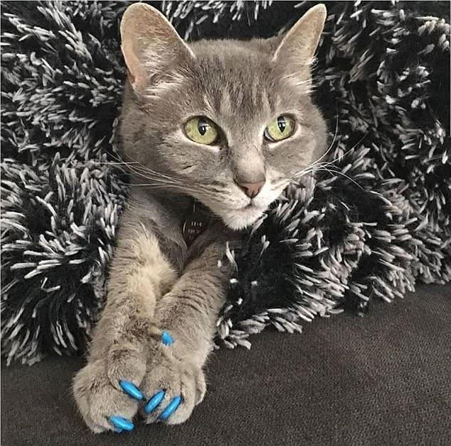 貓咪戴上爪套