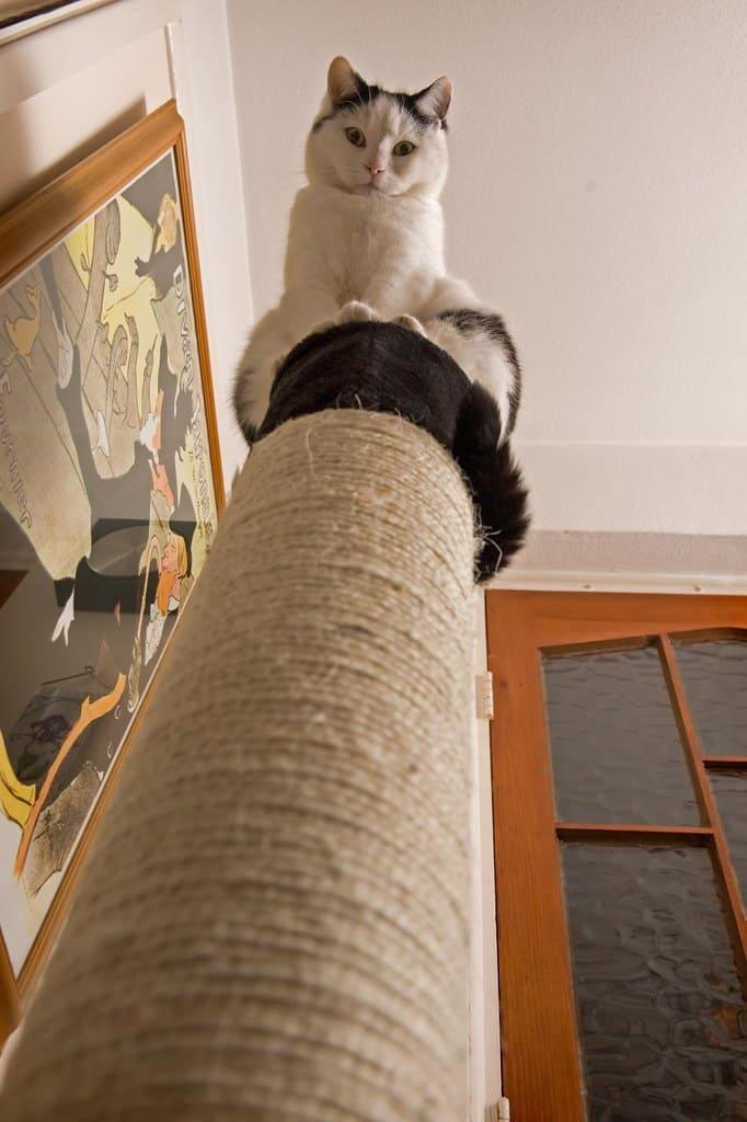善於利用垂直空間