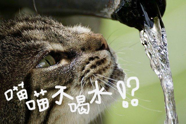 貓咪不愛喝水?教你杜絕慢性脫水十撇步