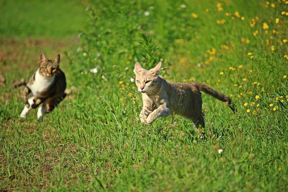 奔跑中的貓