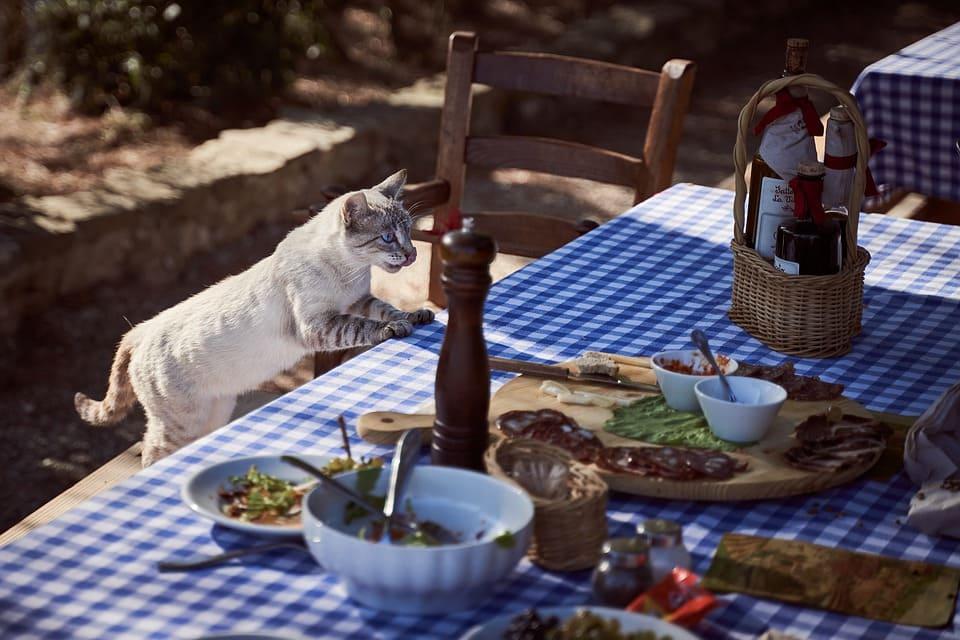 貓咪食用人類食物