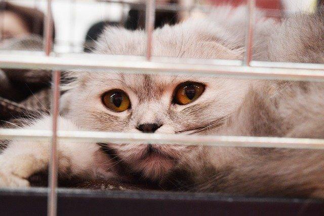 關在籠裡的貓咪