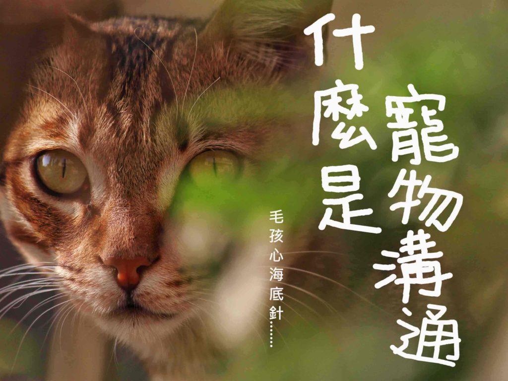 寵物溝通精選圖片