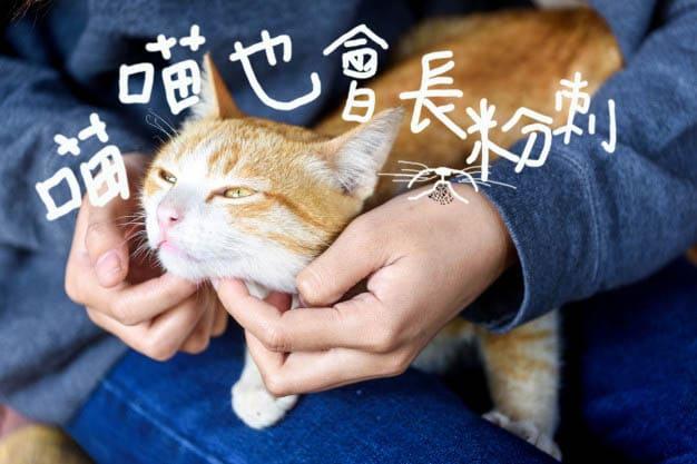 貓咪長粉刺精選圖片