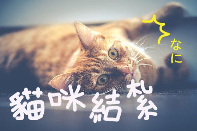 貓咪結紮大補帖!!!完整重點整理