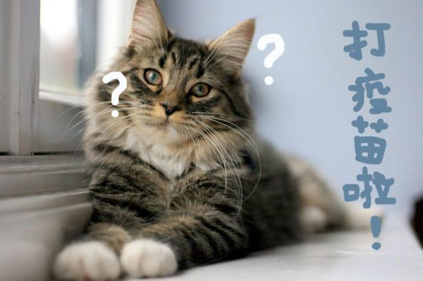 貓咪疫苗霧煞煞?完整秘笈通通交給你!