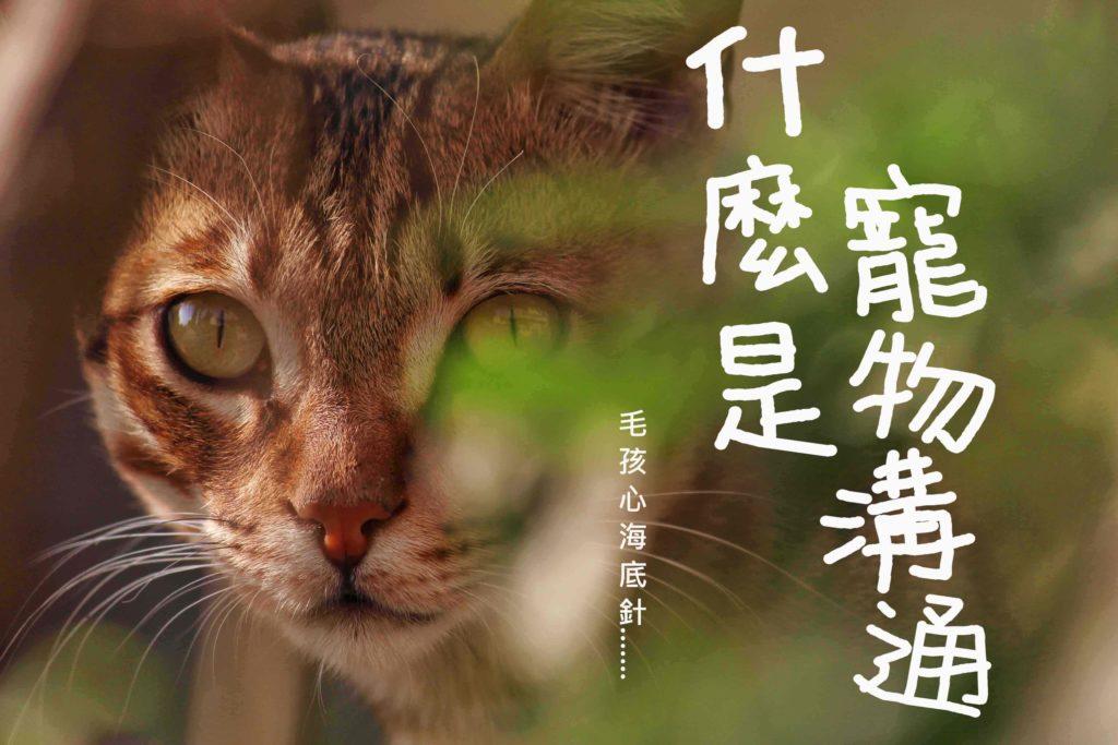 寵物溝通精選圖