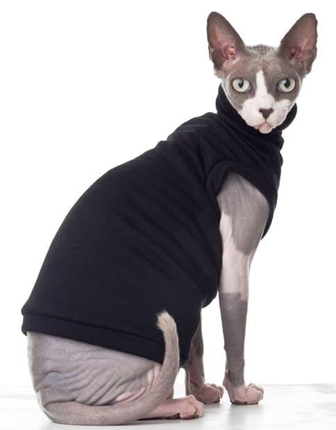 穿上衣服的貓
