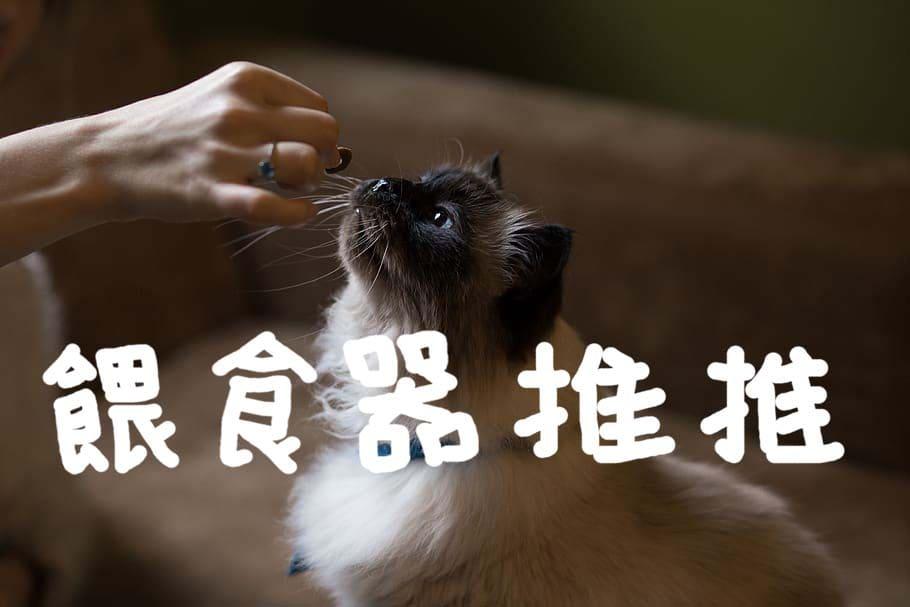 十大貓自動餵食器推薦評比[2021年最新版]