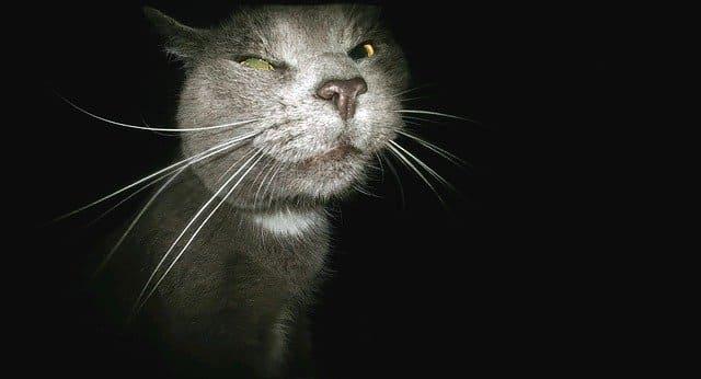 寵物監視器夜間拍攝