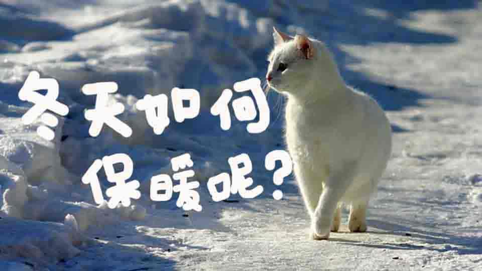 冬天貓貓保暖小撇步與必備良品大公開!噴嚏遠離我