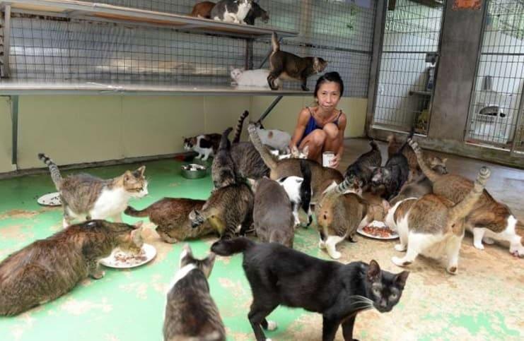 收容所裡的貓