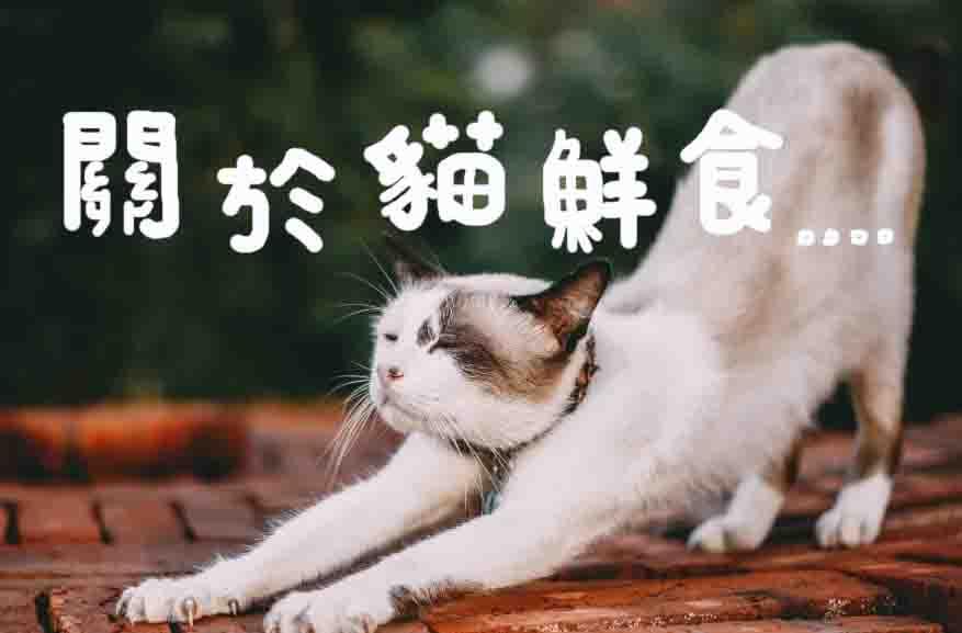 關於貓鮮食,你要知道的事【優質貓奴必讀】