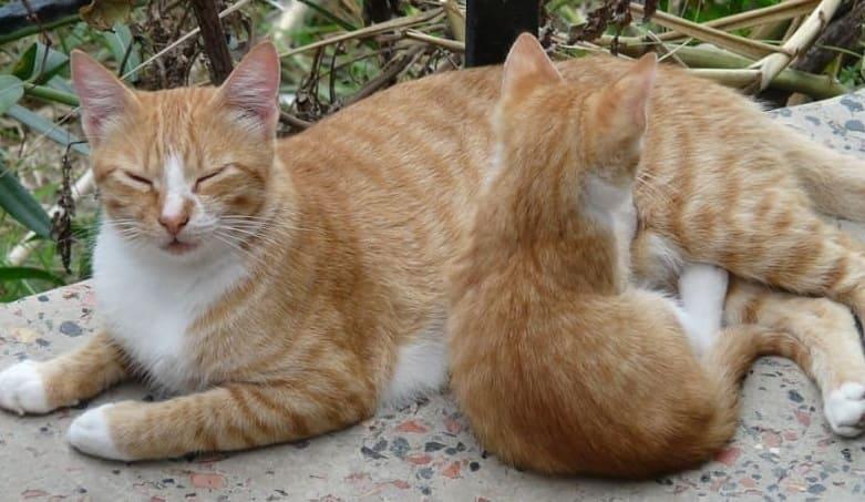 貓媽媽與貓小孩