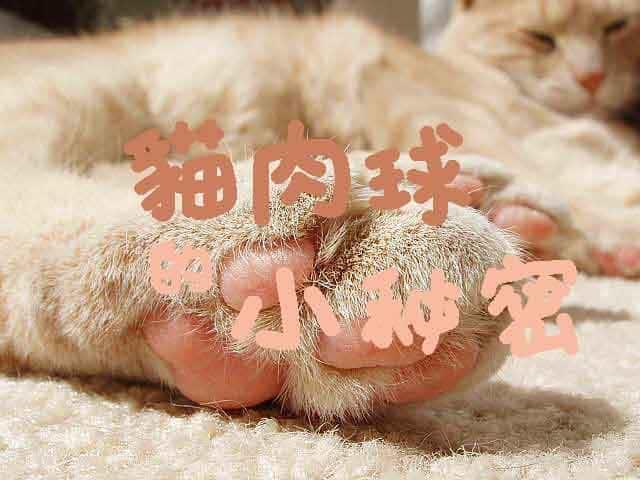 從貓肉球看健康!你的貓屬於哪種體質?