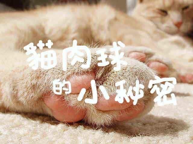 從貓肉球看健康!