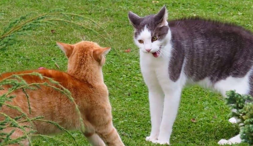 貓咪間打架