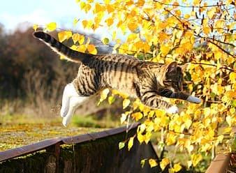 跳躍中的貓