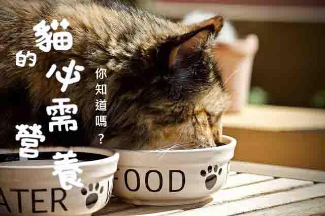 貓的八大必須營養給自製鮮食的你!!【優質貓奴必讀】