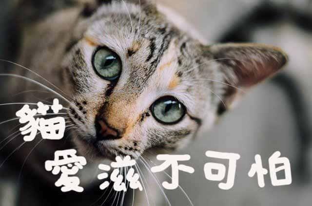 別跟我說你怕貓愛滋,你真的了解嗎?