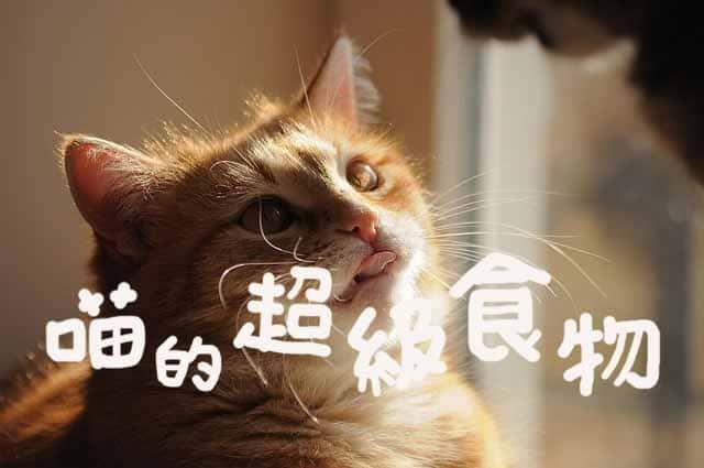 貓奴自製鮮食一定要知道的九種貓咪超級食物!