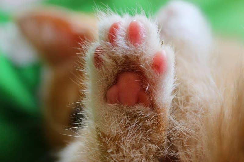 粉紅色貓肉球