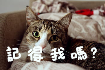 貓記憶力有多長