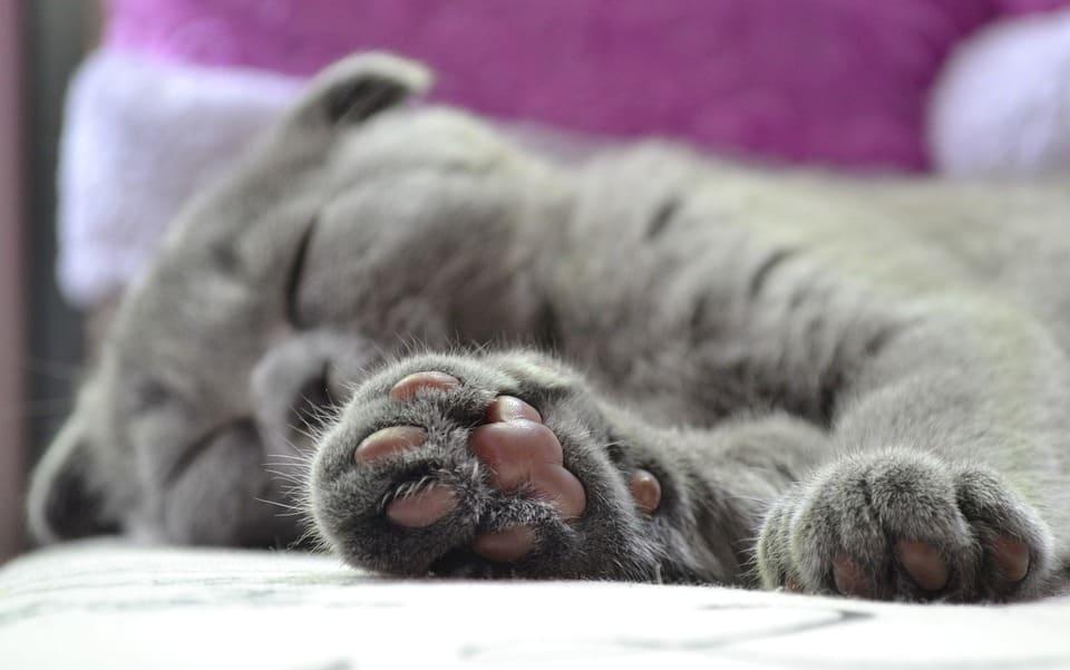 豆沙色的貓肉球