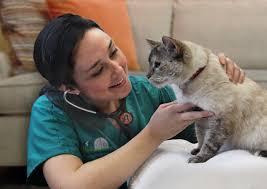 獸醫到府看診