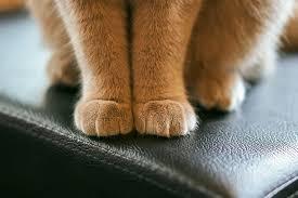 貓肉球示意圖