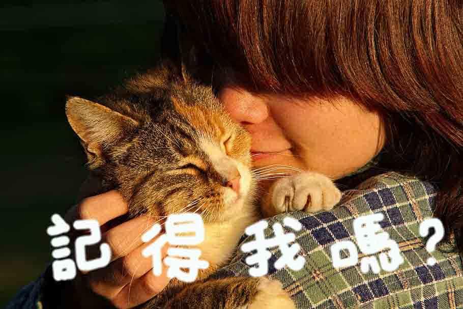 貓記憶力好嗎?貓咪是否記得你,實際上還要看他的意願!