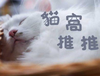 夏天十大貓窩推薦評比,讓你的主子透心涼~[2020年最新版]