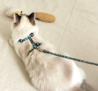 Envy貓胸背帶
