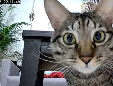寵物監視器被駭客攻擊讓陌生人看光光?!趨勢科技智慧網安管家帶給你全面防護